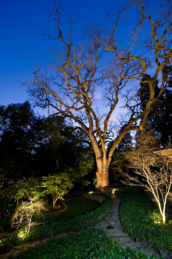 Backyard Oak Tree Feature Lighting